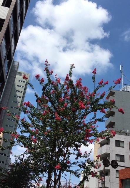 昼前はこんなに良い天気