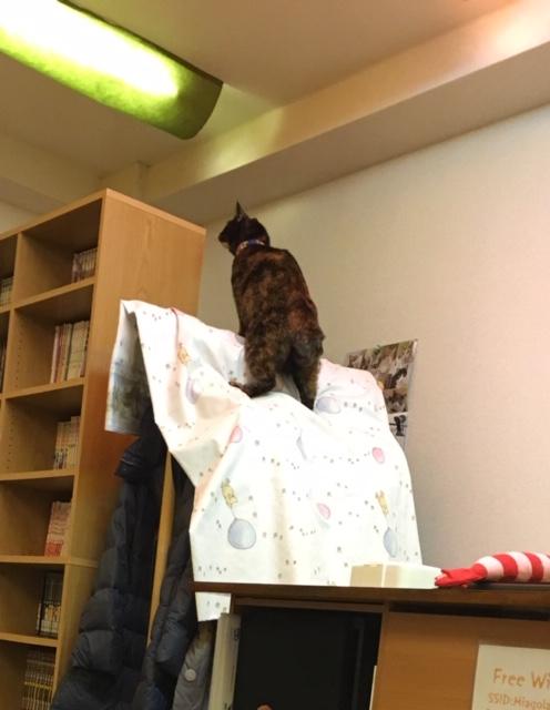 本棚の上にジャンプ